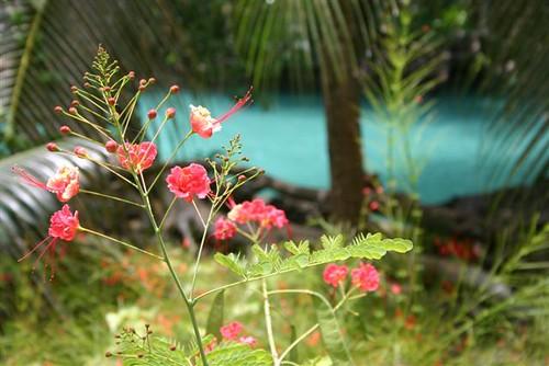 Vanuatu 2011
