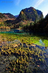 Grass Lake (nawapa) Tags: china travel autumn lake flower color tree landscape ancient view five scenic valley fallen sichuan jiuzhaigou 2011 nanping nawapa