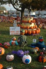 Sycamore Pumpkin Fest 2011 (6)
