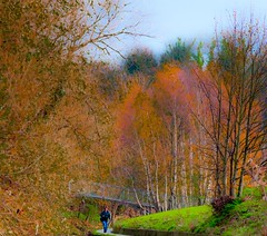 Late autumn along the Dodder (Steve-h) Tags: bridge pink november blue autumn trees ireland red dublin orange woman brown color colour green fall nature colors grass leaves yellow metal lady river concrete gold grey golden beige colours path bare branches pedestrian clothes walker adobe creativecommons handheld railings willows autumnal birches lightroom rathfarnham alders 2011 steveh adobelightroom canonef300mmf4lisusmlens canoneos5dmk2 thisisnotasquare