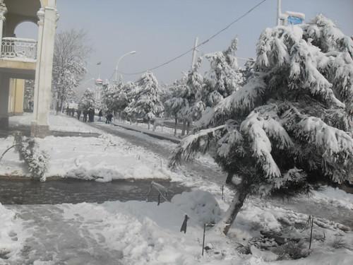 Последствия снегопада в Курган-тюбе (23)