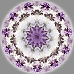 stargate 11 (SueO'Kieffe) Tags: digital crystal mandala meditation spiritual ascension auraliteamethyst