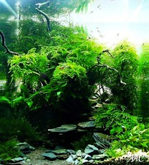 aquascape landscape
