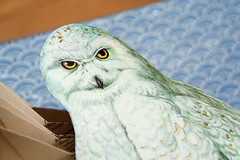 Altered Books: Owl of the Arctic - detail (Rachael Ashe) Tags: bird paper book artwork pages owl alteredbooks bookarts