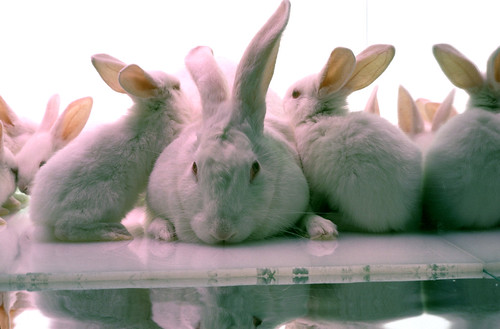 rabbits-1