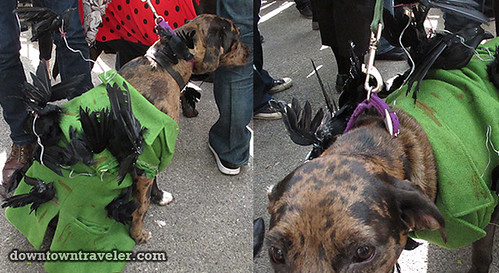 Tompkins Park Halloween Dog Parade_Catahoula in The Birds costume