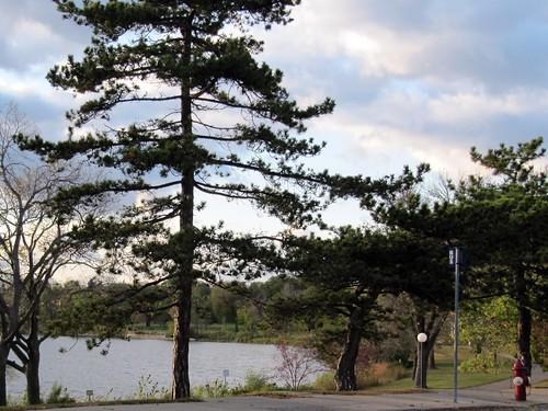 Lake Hiawatha from 45th St E