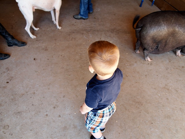 barn activity