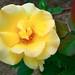 ハニー ブーケ(Honey Bouquet)