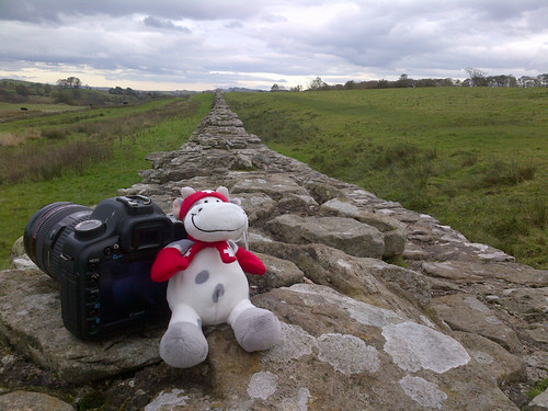 Cowzen at Hadrian's wall.