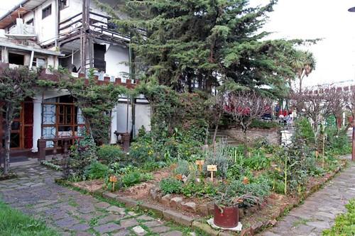 The organic garden at Itegue Taitu Hotel, Addis Ababa, Ethiopia
