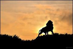 Le Roi Lion (Excalibur67) Tags: sunset sky monument soleil nikon lumire couleurs ciel alsace d90 levedesoleil vosgesdunord