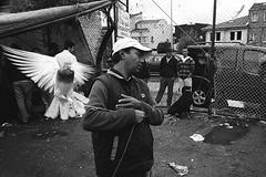 Pigeon market /   (1) (AndreyY) Tags: street leica turkey market kodak pigeon streetphotography istanbul 400tx push istambul m7 ddx