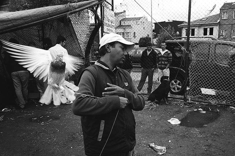 Pigeon market / Голубиный рынок (1)