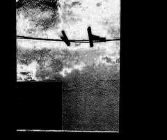 The Birds (_Spring_ Spring) Tags: abstract art digital poetry mixedmedia deep surreal honest facing cruel vesnaperovic vesnaperovicphotography