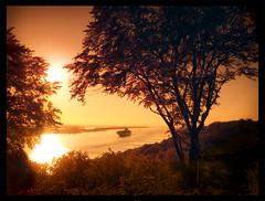 sunset orange sun tree berlin sunglasses yellow river handy landscape corporate design fotografie sonnenuntergang hamburg samsung 7 container gelb werbung fluss landschaft sonne schiff baum elbe handycam sonnenbrille blankenese werbeagentur omnia agentur elbblick