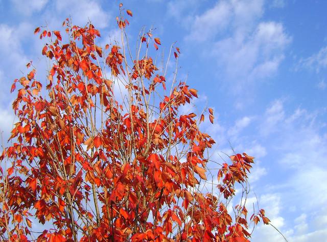 South Bend: cores de outono