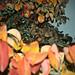 Sonbahar arka bahçemde_2.