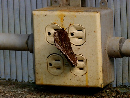 electric butterfly plug outlet