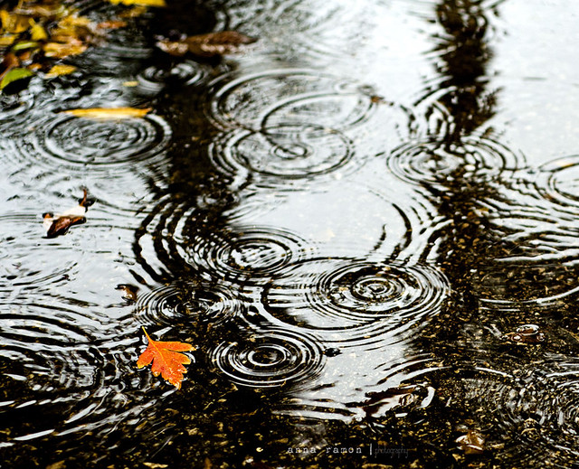 como agua de noviembre