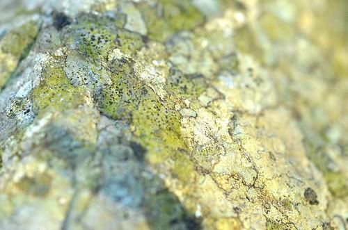 lichenlandscape_138