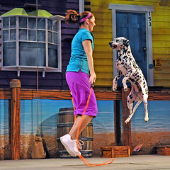 Skipping dalmation..Pets AHoy (littlestschnauzer) Tags: world show park sea summer vacation rescue dog pet pets white holiday black dogs animals orlando jump florida stage rope tricks dalmation seaworld skipping trainer rescued ahoy shelters 2011 cannine