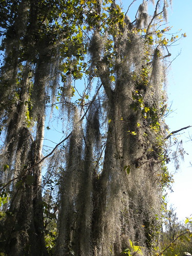 Jean Lafitte Nat'l Swamp