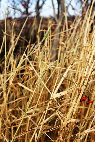 Nature - 11-11-11