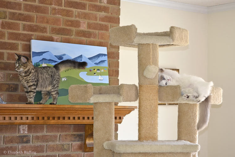 Tabby kittens at play, Phoebe exploring the mantle, with Josephine on the cat gym, photo by Elizabeth Ruffing