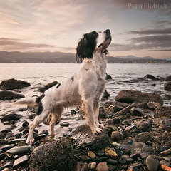My new Friend 12-11-11 (Peter Ribbeck) Tags: portrait dog scotland bravo squareformat cloch clochlighthouse clochpoint peterribbeck