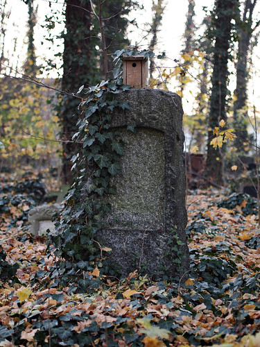 Herbst in Schönebeck 20
