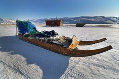 Dog Sled (@ilovegreenland) Tags: travel winter cabin husky arctic adventure commercial greenland dogsledding sleddog arcticcircle dogsled kangerlussuaq dogsledging bymadspihl ilovegreenland limitedcommerciallicense begrnsetkommerciellicens