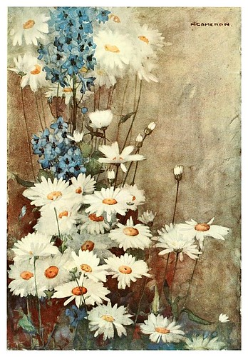 014-Margaritas y Delphinium-The flowers I love 1917- Katharine Cameron