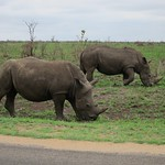 "White Rhinos <a style=""margin-left:10px; font-size:0.8em;"" href=""http://www.flickr.com/photos/14315427@N00/6347169146/"" target=""_blank"">@flickr</a>"