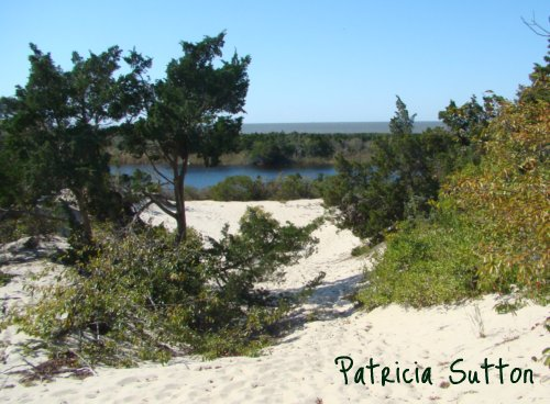 004 - RedCedars in dunes-HigbeeBeach-10-5-11