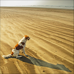 Doggie on the beach, Akshi, Maharashtra (Rajesh Vijayarajan Photography) Tags: dog india beach sand shadows bitch maharashtra doggie morningwalk alibag arabiansea sandpatterns nikond80 akshibeach rajeshvijayarajan rajeshvijayarajanphotography rajeshvj gettyimagesindiaq4