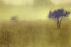 Solleveld (Pieter Musterd) Tags: motion blur nature photoshop canon movement raw arty artistic creative nederland thenetherlands natuur denhaag motionblur 5d nik paysbas zuidholland cameramovement naturalarea natuurgebied kreatief artistiek sgravenhage movingcamera solleveld colorefexpro pietermusterd photoshopcs4 artofimages canon5dmarkii denhaag2018 gisellavirus