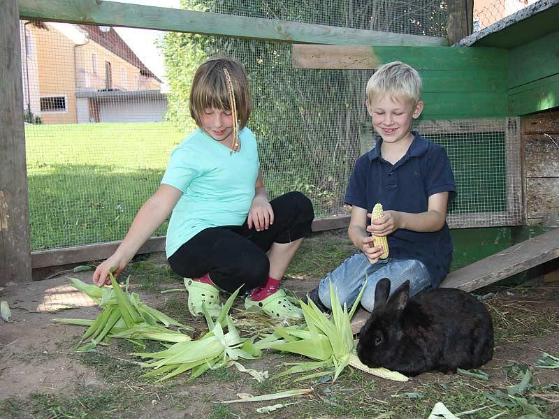 Kastanienhof Selz - Kinder füttern Hasen