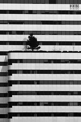 Structural Fungus (Ian Sane) Tags: street trees white black building tower ice oregon skyscraper portland ian photography downtown center images architectural madison fungus cube jefferson avenue 5th structural icecube 6th sane keybank pacwest