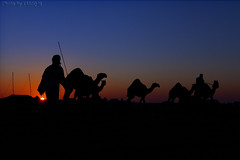 Shepherd (TARIQ-M) Tags: sunset texture sahara silhouette sunrise landscape sand waves pattern desert shepherd ripple patterns dunes wave tent camel ripples camels convoy riyadh saudiarabia patron     canoneos5d herdsman                      ef1635mmf28liiusm canoneos5dmarkii