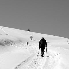 túrázás kopóval / hiking with hound (debreczeniemoke) Tags: winter dog snow mountains march hiking hound kutya március gutin hó tél túra hegyek kopó rozsály canonpowershotsx20is igniş