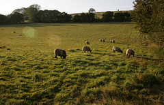 THE VALLEY (Adam Swaine) Tags: county uk england sky green english beautiful rural canon landscape countryside kent flora october sheep britain east valley fields counties naturelovers 2011 thisphotorocks adamswaine mostbeautifulpicturesmbppictures wwwadamswainecouk kentishlandscape
