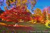 Sevile Gardens (Muzammil (Moz)) Tags: uk autumn london fall moz leafcolors virginiawaters muzammilhussain sevilegardens
