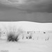 White Sands New Mexico-9.jpg