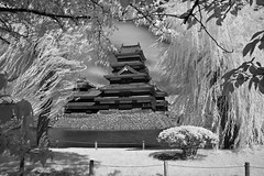 Matsumoto Castle Through Wind-blown Willows In Black And White (aeschylus18917) Tags: castle nature rain japan architecture clouds landscape ir rainbow nikon scenery d70 nikond70 fort surreal infrared keep  moat matsumoto iridescence fortress doublerainbow nagano 1870mm naganoprefecture   tenshukaku naganoken    matsumotocastle crowcastle  1870f3545g matsumotocity matsumotoj d700    nikond700 matsumotoshi karasujo nikkor1870f3545g danielruyle aeschylus18917 danruyle druyle   nikkor1870f3545gdx