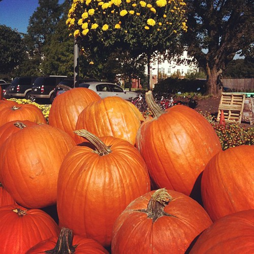 Hooray pumpkins! #fallinnewengland