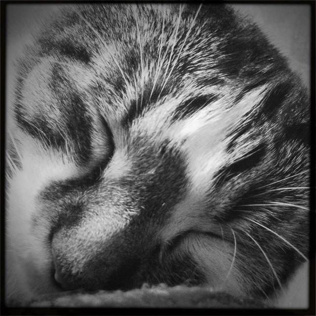 Onion sleeping 3