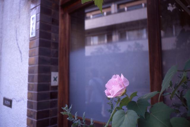 玄関先の彩り