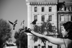 frolic (skie.inc) Tags: windows bw paris tree armpit girl smile sunshine birds fly blackwhite frolic arm wing september notredame sparrow laugh feed flap bilding etet 2011 skie mosoly lny madr feketefehr verb skieinc