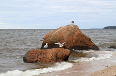 Glacial Erratics and Long Island Sound (sandy richard) Tags: usa newyork unitedstates geology wildwood calverton wildwoodstatepark sandyrichard longislandgeology sandrarichard